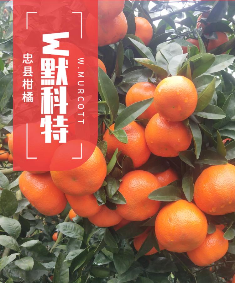 食品生鮮蔬菜西紅柿詳情頁-1.png