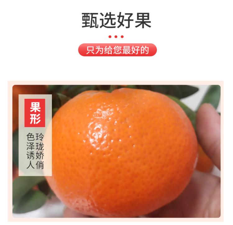 食品生鮮蔬菜西紅柿詳情頁-5.png