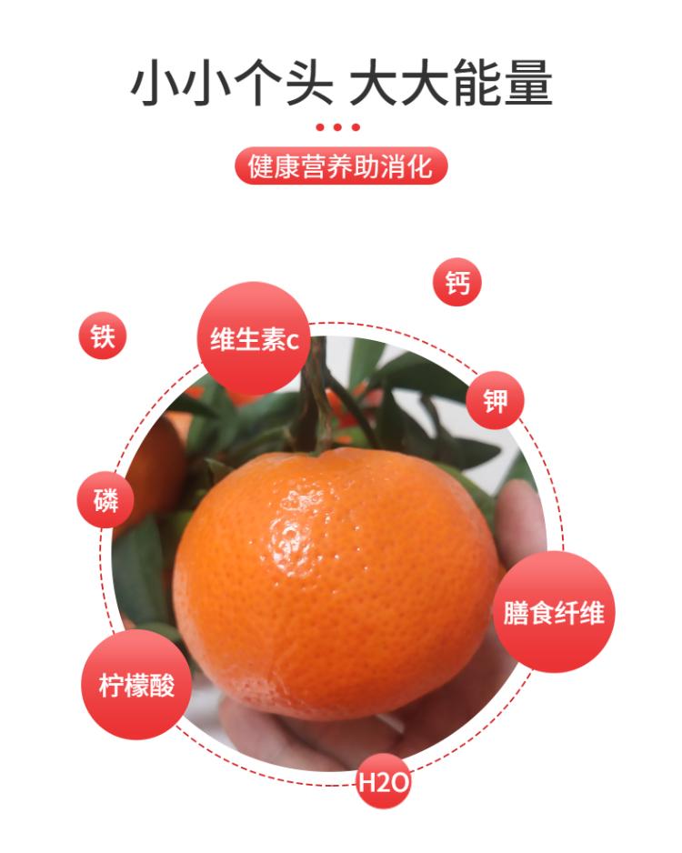 食品生鮮蔬菜西紅柿詳情頁-3.png