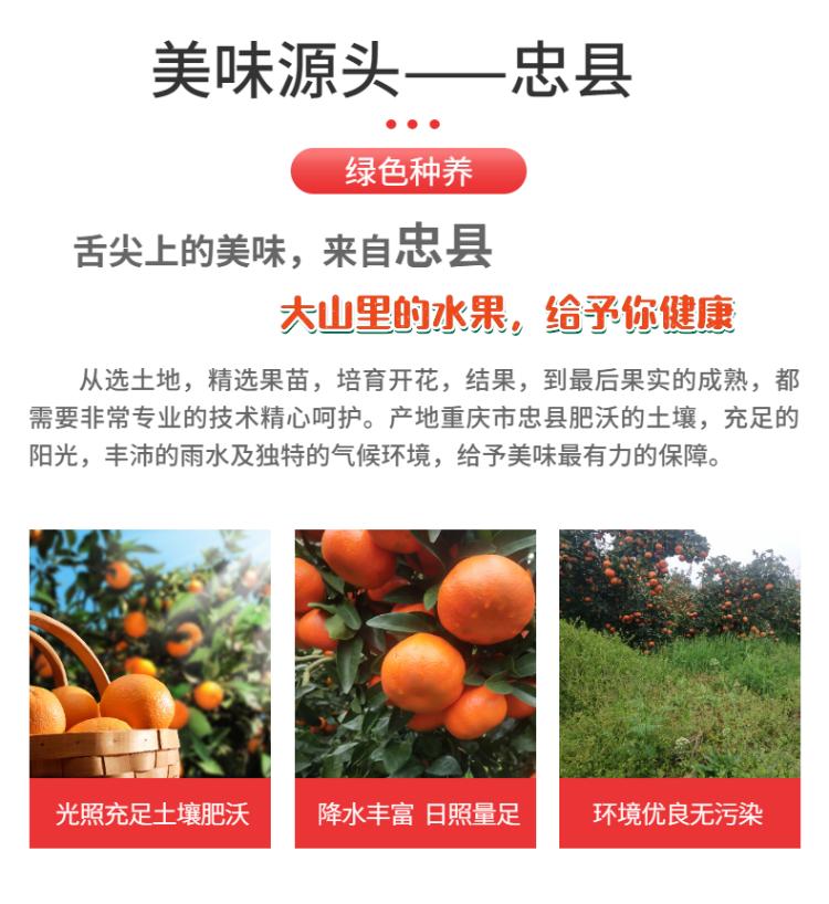 食品生鮮蔬菜西紅柿詳情頁-4.png