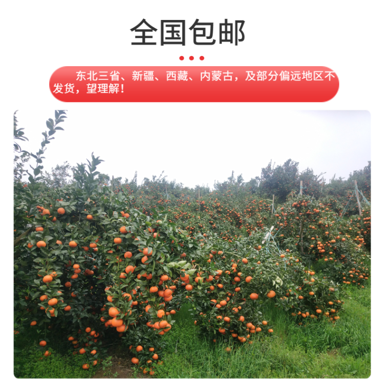 食品生鮮蔬菜西紅柿詳情頁-7.png