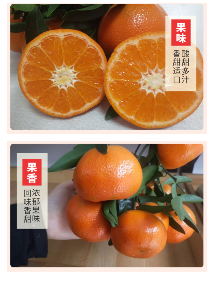 食品生鮮蔬菜西紅柿詳情頁-6.png